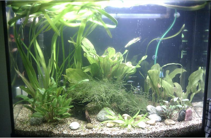 neues 130 liter aquarium aquarium forum. Black Bedroom Furniture Sets. Home Design Ideas