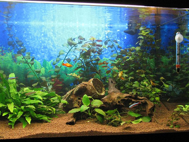 mein 160 liter gesellschftsbecken aquarium forum. Black Bedroom Furniture Sets. Home Design Ideas