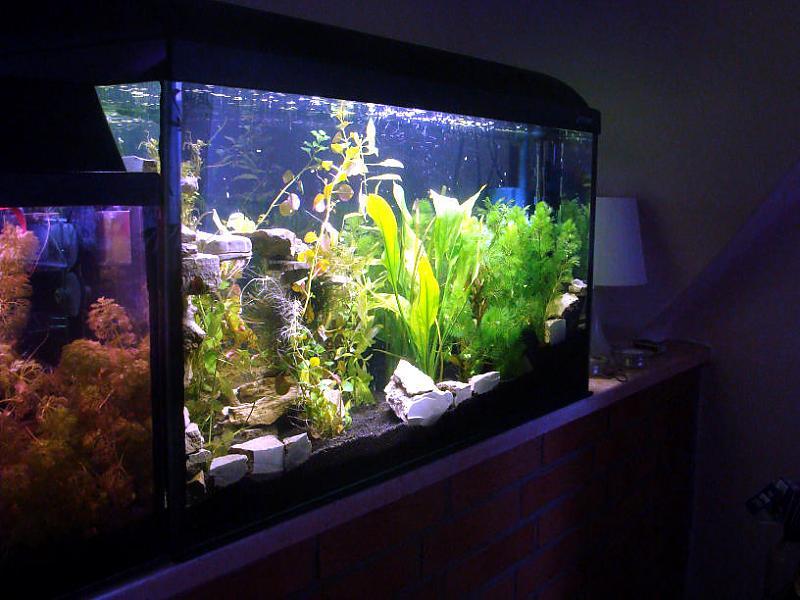 Aquarien Silikon Trockenzeit Epoxidharz Aquarium Trockenzeit