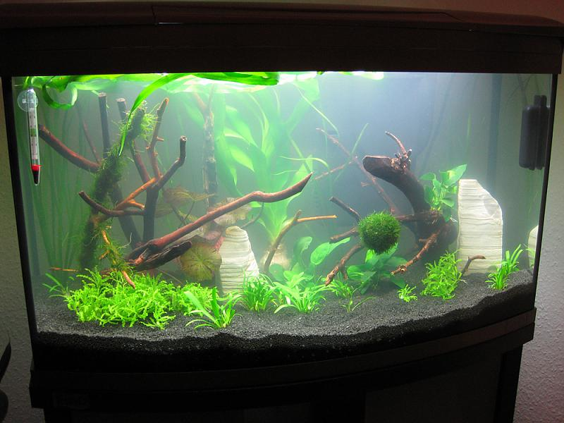 mein neues 100 liter aq aquarium forum. Black Bedroom Furniture Sets. Home Design Ideas