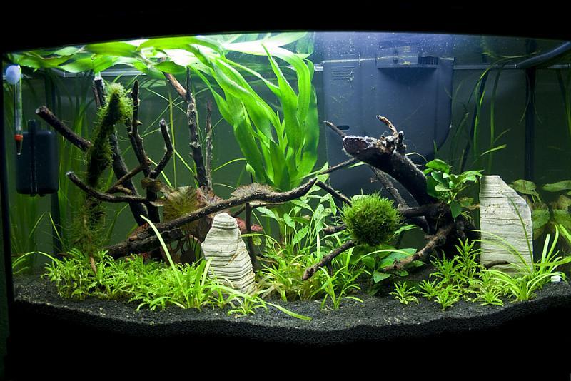mein neues 100 liter aq aquarium forum. Black Bedroom Furniture Sets. Home Design Ideas
