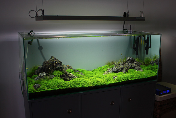 Aquarium Led Beleuchtung Erfahrung. Great Gallery Of Led Beleuchtung ...