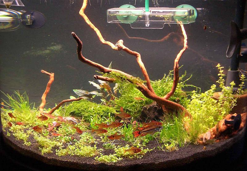 Bio co2 anlage und paffrathschale bauen aquarium forum for Co2 anlage aquarium