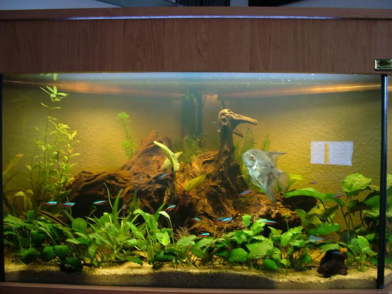 leuchtstofflampen braunes wasser durch wurzel wie lange beleuchten aquarium forum. Black Bedroom Furniture Sets. Home Design Ideas