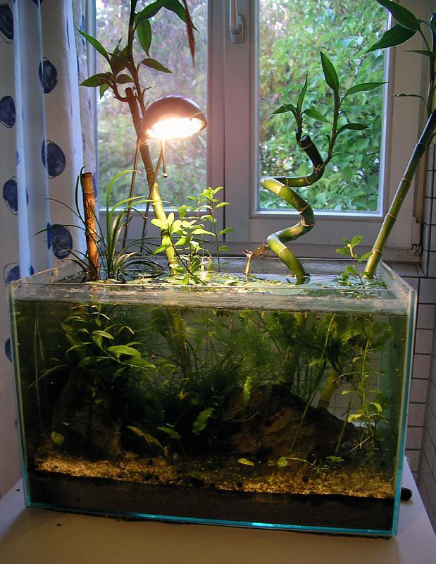 Bambus Oder Tonkin G Aquarium Forum