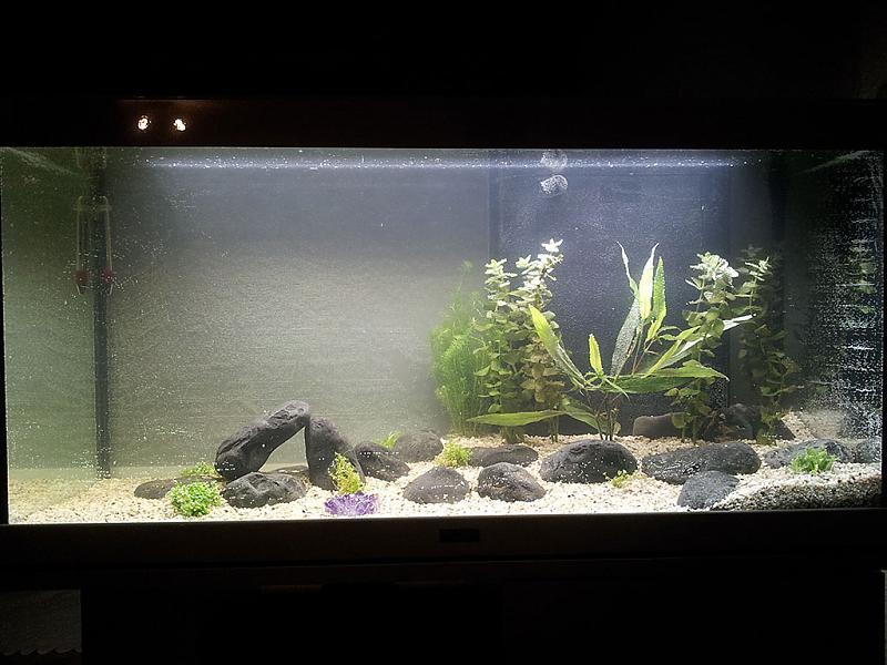 Brandneu Pflanzen Ausreichend Watt für diese Pflanzen? - Aquarium Forum HD32