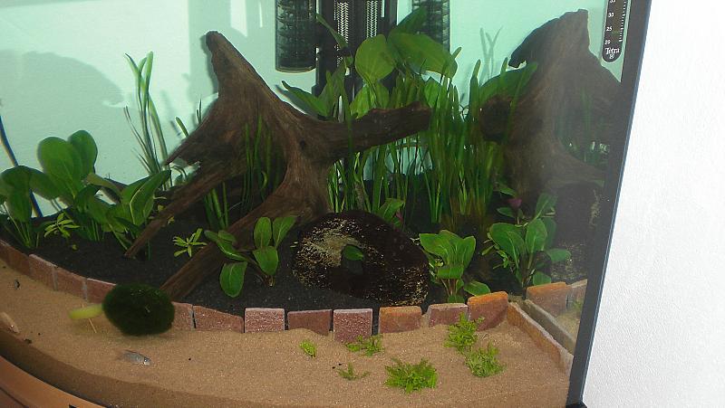 gesellschaftsbecken juwel trigon 190 aquarium forum. Black Bedroom Furniture Sets. Home Design Ideas