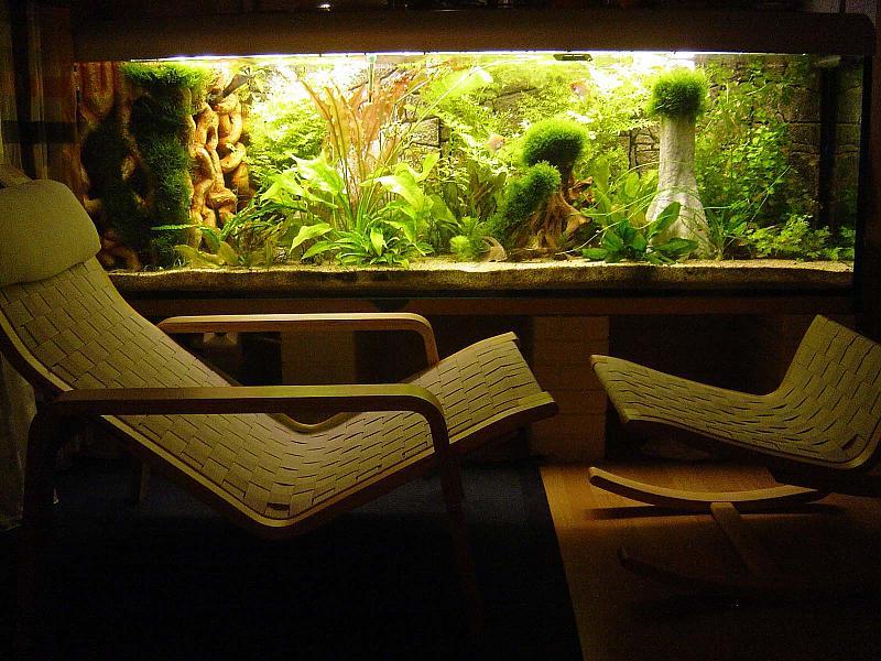 720l gesellschaftsbecken mit fotos aquarium forum. Black Bedroom Furniture Sets. Home Design Ideas